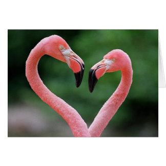 Flamingos note card