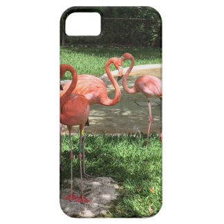 Flamingos on the Riviera Maya in Mexico iPhone SE/5/5s Case