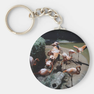 Flamingos preparing to fly from secluded cove keychain