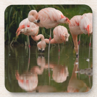 Flamingos Set of 6 Costers Coaster