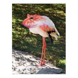 Flamingtoad postcard