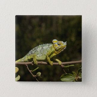 Flap-neck Chameleon Button