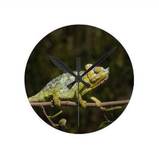 Flap-neck Chameleon Round Clock