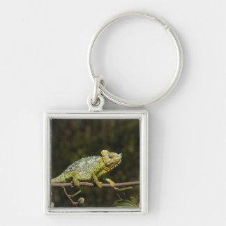 Flap-neck Chameleon Keychain