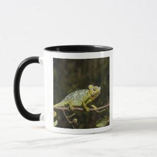 Flap-neck Chameleon Mug