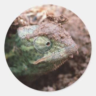 Flap-Necked Chameleon 2 Classic Round Sticker