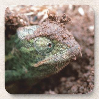 Flap-Necked Chameleon 2 Drink Coaster