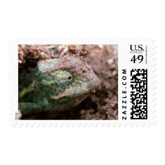 Flap-Necked Chameleon 2 Postage
