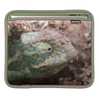 Flap-Necked Chameleon 2 Sleeve For iPads
