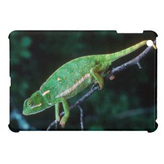 Flap-Necked Chameleon 3 iPad Mini Cases