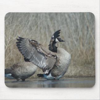 Flapping Canada Goose Klamath Basin Mouse Pad