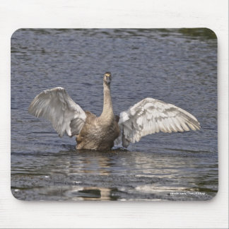 Flapping Mute Swan Wildlife Waterfowl Photo Mouse Pad