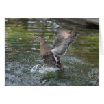 Flapping my wings greeting card