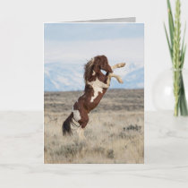 Flash Rears Wild Horse Greeting Card