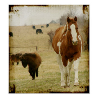 Flashy and the Mini  Horse Filly Posters