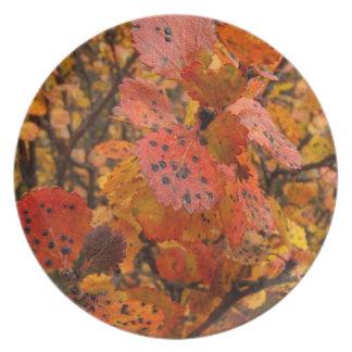 Flashy Fall Dinner Plate