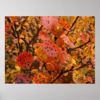 Flashy Fall Print