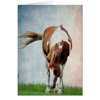 Flashy Paint Horse Mare Card
