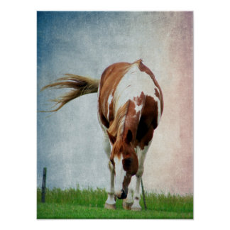 Flashy Paint Horse Mare Posters