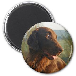 Flat Coated Retriever dog beautiful photo magnet
