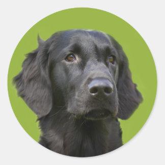 Flat Coated Retriever dog black beautiful photo Classic Round Sticker