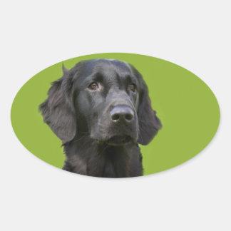 Flat Coated Retriever dog black beautiful photo Oval Sticker
