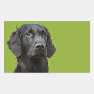 Flat Coated Retriever dog black beautiful photo Rectangular Sticker