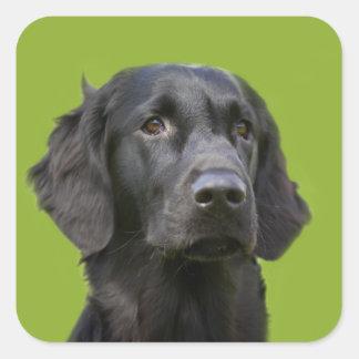 Flat Coated Retriever dog black beautiful photo Square Sticker