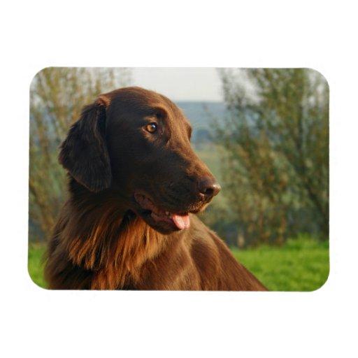 Flat Coated Retriever dog photo portrait  magnet
