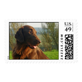 Flat Coated Retriever dog photo postage stamp