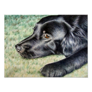 Flat Coated Retriever Poster