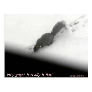 Flat Earth Squirrel Postcards