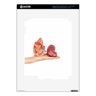 Flat hand showing model human kidney decal for iPad 3