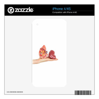 Flat hand showing model human kidney iPhone 4S decals