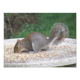 Flat Squirrel Feeding Photo Print