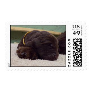 Flatcoat puppy stamps
