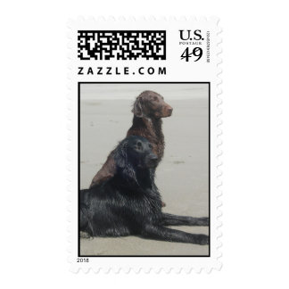 Flatcoats at the beach stamps