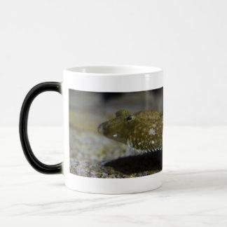 Flatfish Magic Mug