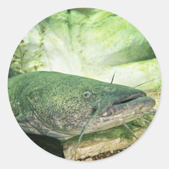 Flathead Catfish Classic Round Sticker R F D Df C B C B Fede D V Waf Byvr