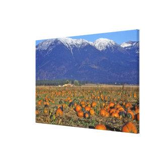 Flathead Valley Montana Pumpkin patch Canvas Print