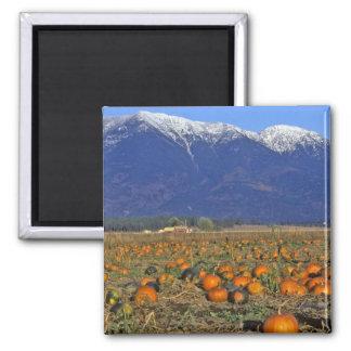 Flathead Valley Montana Pumpkin patch Magnet