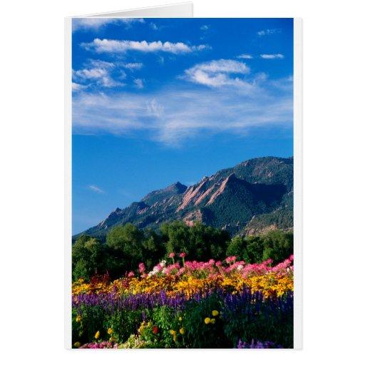 Flatirons and Flowers, Boulder Colorado Cards