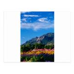Flatirons y flores, Boulder Colorado Tarjetas Postales
