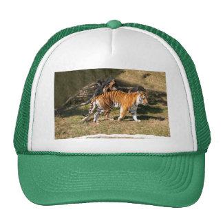 Flavio 009 trucker hat