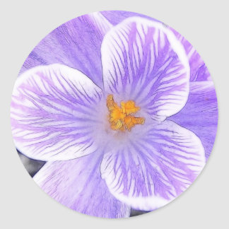 Flawless Purple Crocus Flower Classic Round Sticker