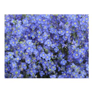 Flax Flowers at Longwood Gardens, Pennsylvania Post Card