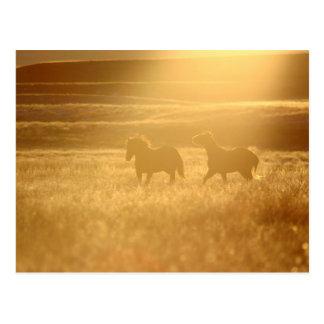 Flaxen Fields Postcard