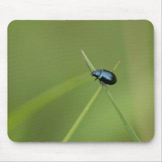 Flea Beetle Mouse Pad