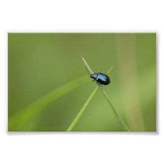 Flea Beetle Photo Art