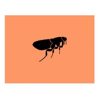Flea Postcards